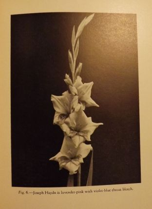 THE GLADIOLUS. Forman T. McLEAN
