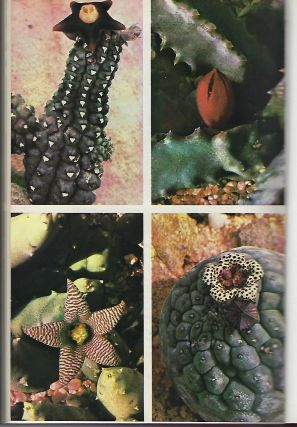 THE ILLUSTRATED REFERENCE ON CACTI AND OTHER SUCCULENTS: VOLUME THREE