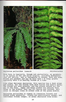 FERNS AND ORCHIDS OF THE MARIANA ISLANDS.