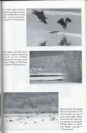 EAGLE'S PLUME: PRESERVING THE LIFE AND HABITAT OF AMERICA'S BALD EAGLE.